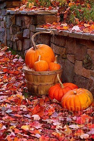 Images d'automne  - Page 2 1dde0810