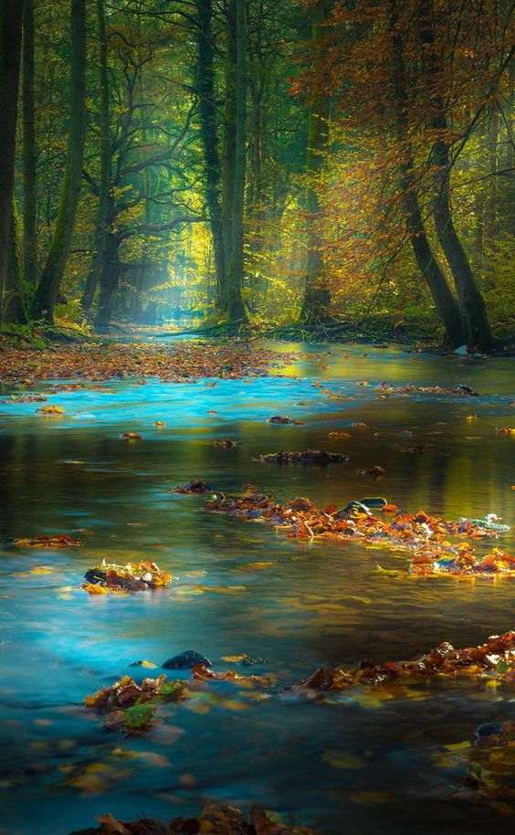 Images d'automne  - Page 2 27bc1a10