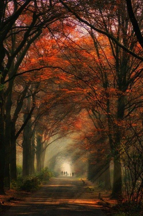 Images d'automne  - Page 3 2e929710