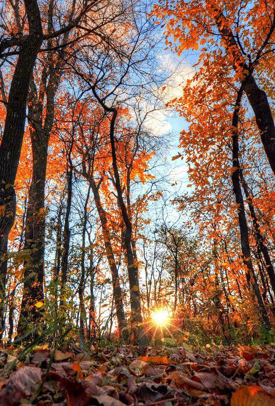 Images d'automne  - Page 7 31e78a10
