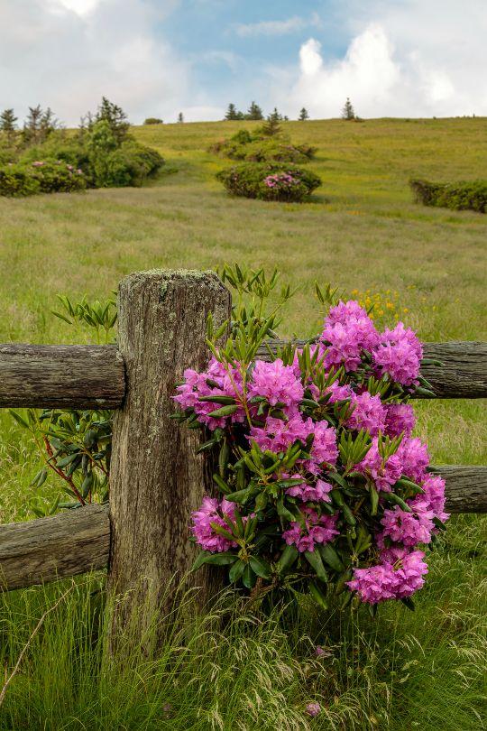Photos de printemps/été - Page 14 45d71510