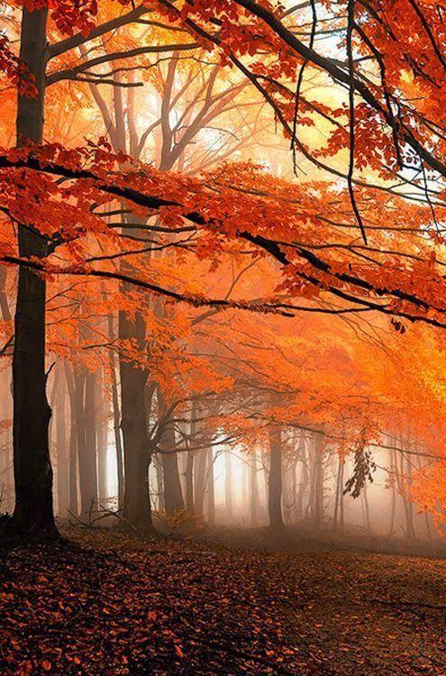 Images d'automne  - Page 5 4e584510