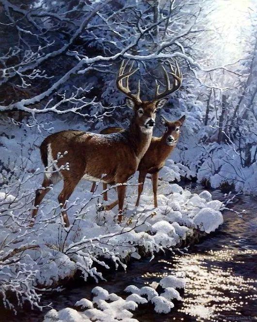 Images d'hiver - Page 3 E5bc9a11