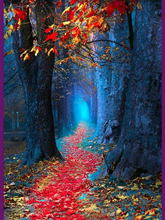 Images d'automne  - Page 3 F5849010
