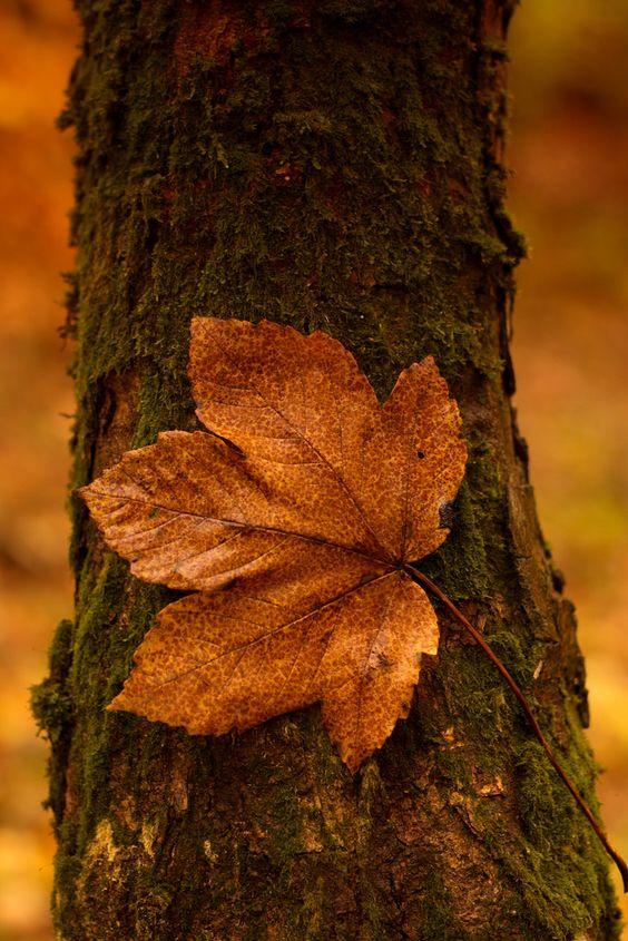 Images d'automne  - Page 5 Thevik10