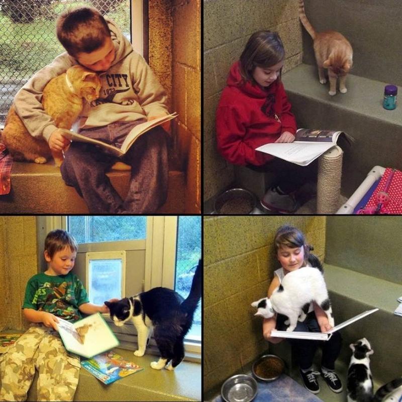 Lecture aux chats Lectur10