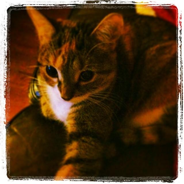 Mes photos instagram... 17945310