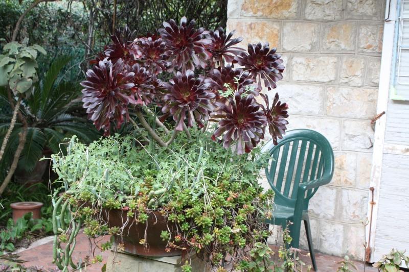 Pour le plaisir, une coupe à végétation hivernale Dernia10