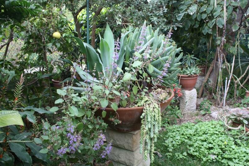 Pour le plaisir, une coupe à végétation hivernale Plectr11