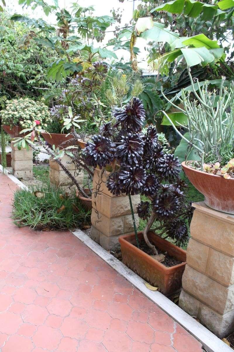Ma terrasse aux succulentes Terras12