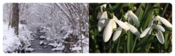 Quand la neige fleurissait. Propri10