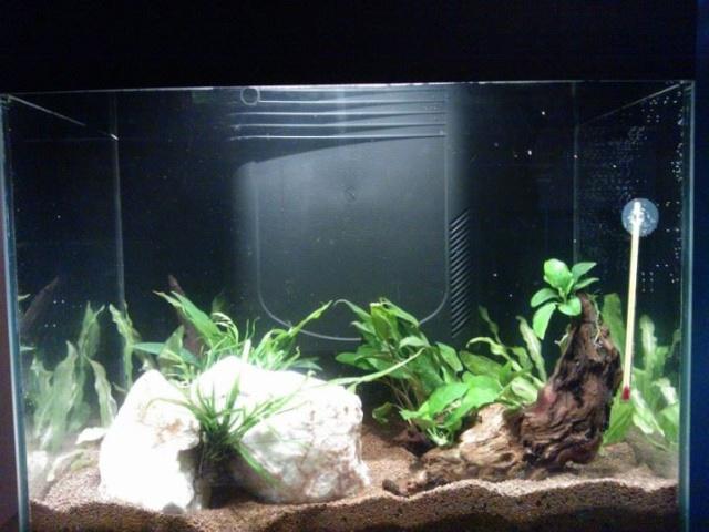 Projet aqua Killies? Aquasv10