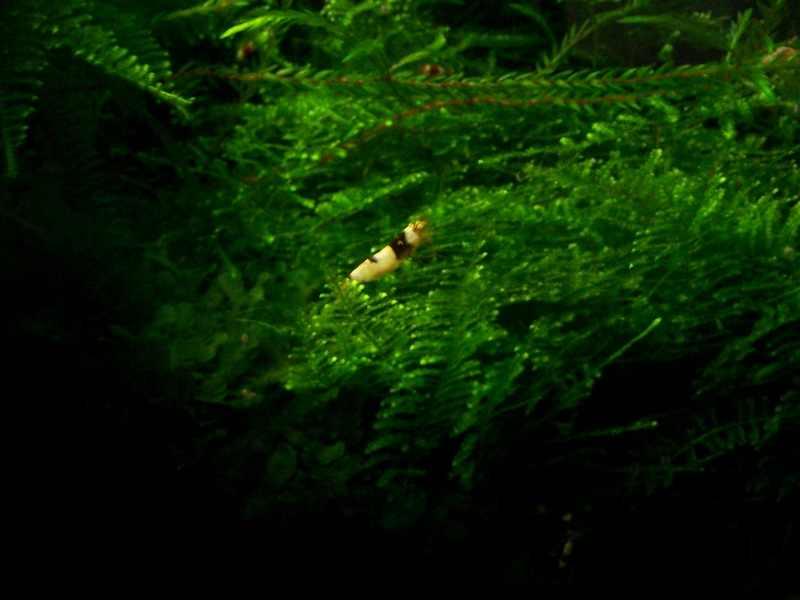 mon nano moss (réfection le 30 10 14 )  - Page 2 Arbre_13