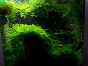 mon nano moss (réfection le 30 10 14 )  - Page 2 Arbre_14