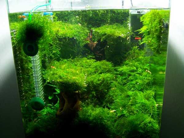 mon nano moss (réfection le 30 10 14 )  - Page 2 Ventes10