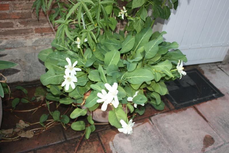 Plante aquatique ss nom  2013-011