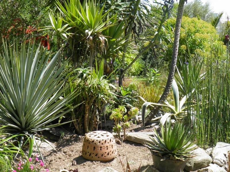 jardin Davarrée P5262910