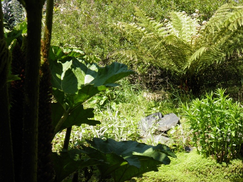 jardin Davarrée P5263110