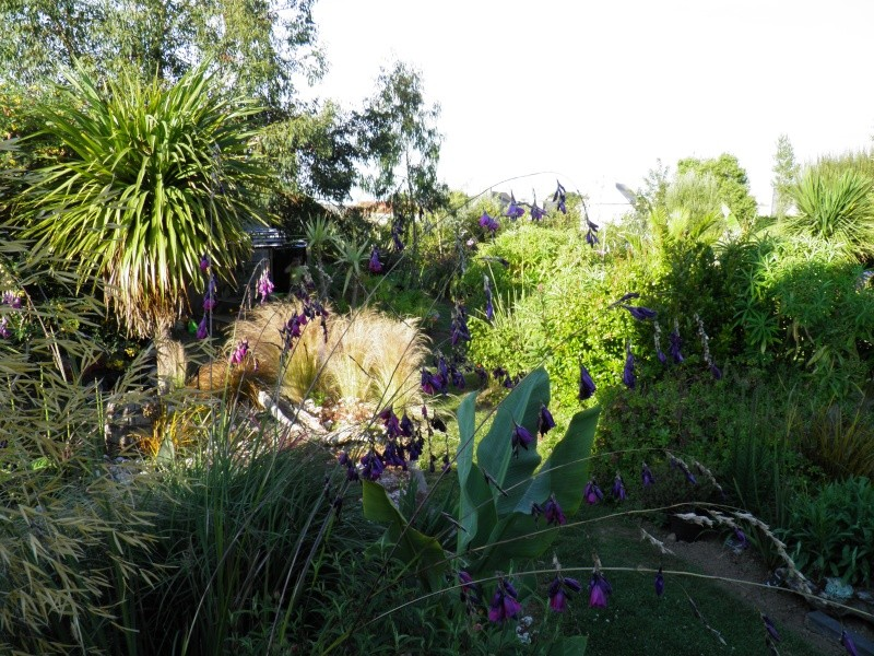 jardin Davarrée P7040910