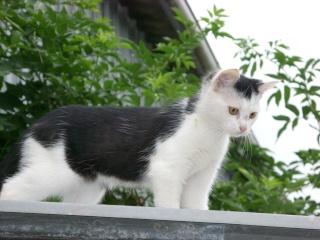 mes chats et mon cochon-d'inde Sn851116
