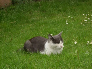 mes chats et mon cochon-d'inde Sn851123
