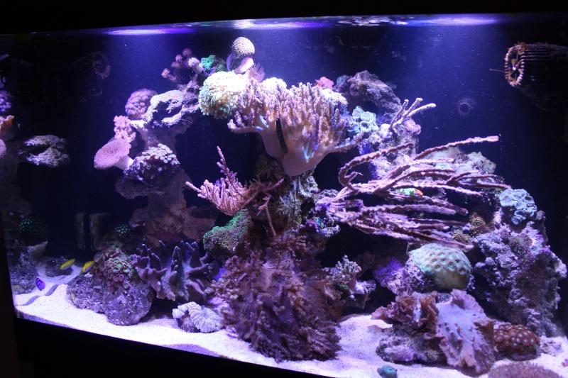 redsea max 250l de darkfisher Img_5910