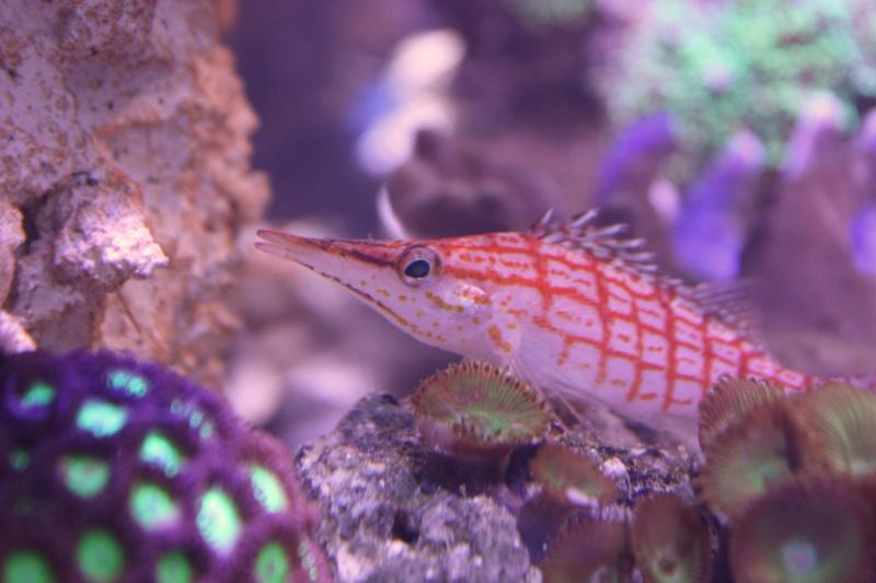 redsea max 250l de darkfisher Img_5911