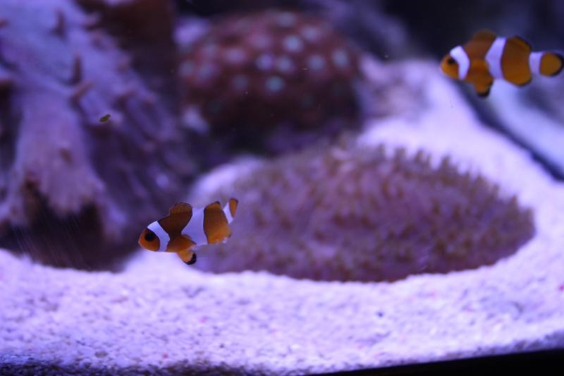 redsea max 250l de darkfisher Img_5912