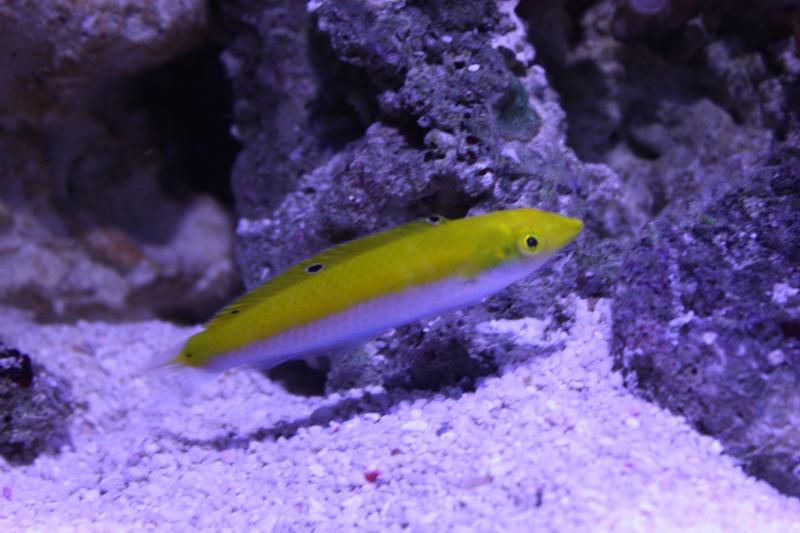 redsea max 250l de darkfisher Img_5913