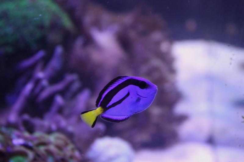 redsea max 250l de darkfisher Img_5914