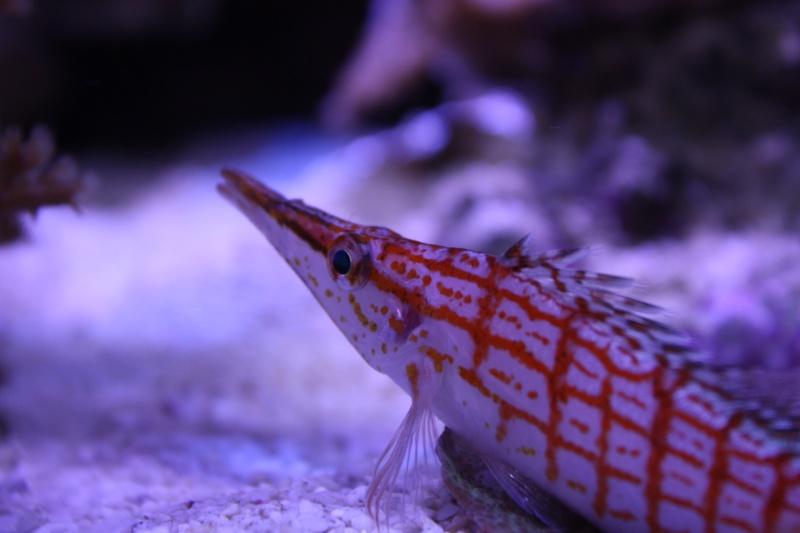 redsea max 250l de darkfisher Img_5918