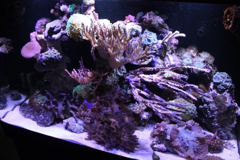 redsea max 250l de darkfisher Img_5920