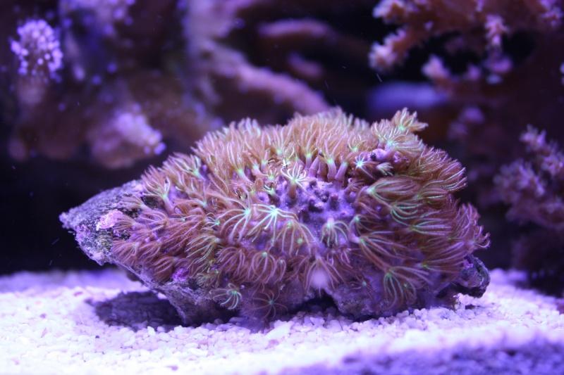 redsea max 250l de darkfisher Img_5921