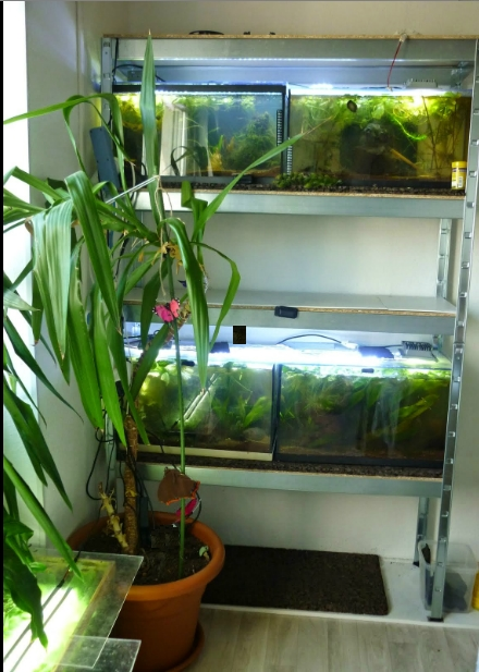 ma nouvelle fishroom Bettag13