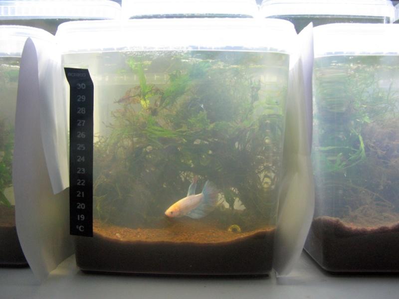 ma nouvelle fishroom Pots_j10