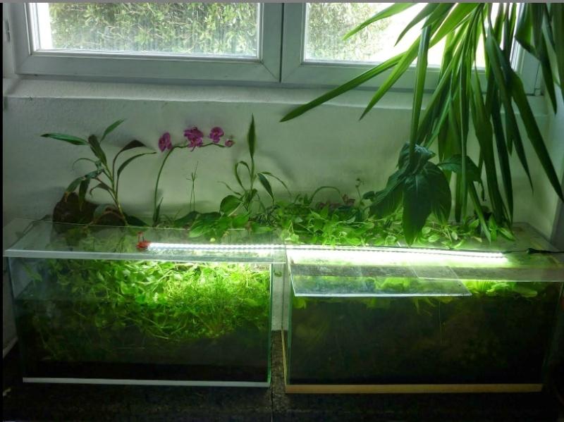 ma nouvelle fishroom Ripari10
