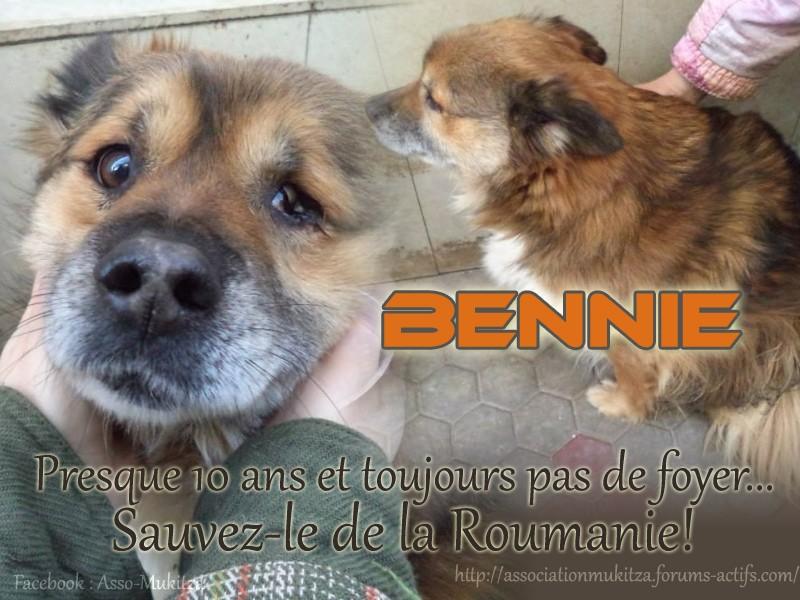 BENNIE papy mâle, né 2005 (Anda) - Pris en charge Association Enfin le Bonheur Bennie10
