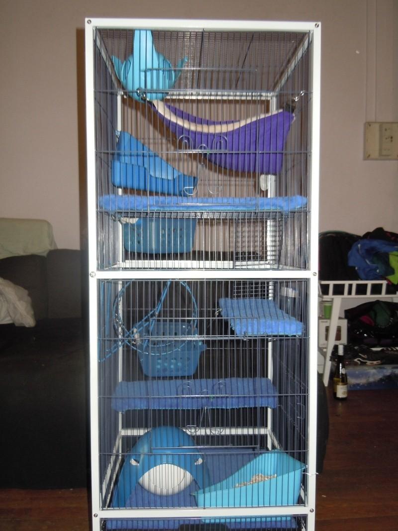 Photos de vos cages - Page 38 Dscn1118