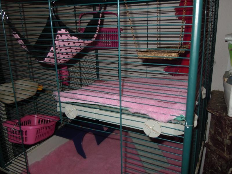 Photos de vos cages - Page 38 Dscn1226