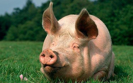 [Sondage] Votre type de touffe préféré ? Pig_1510