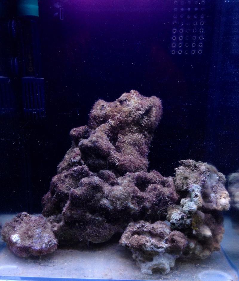 démarrage nano 30l en véritable eau de mer 018dd610
