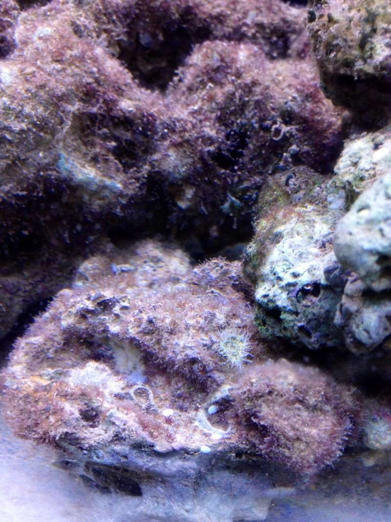 démarrage nano 30l en véritable eau de mer 01ad9f10