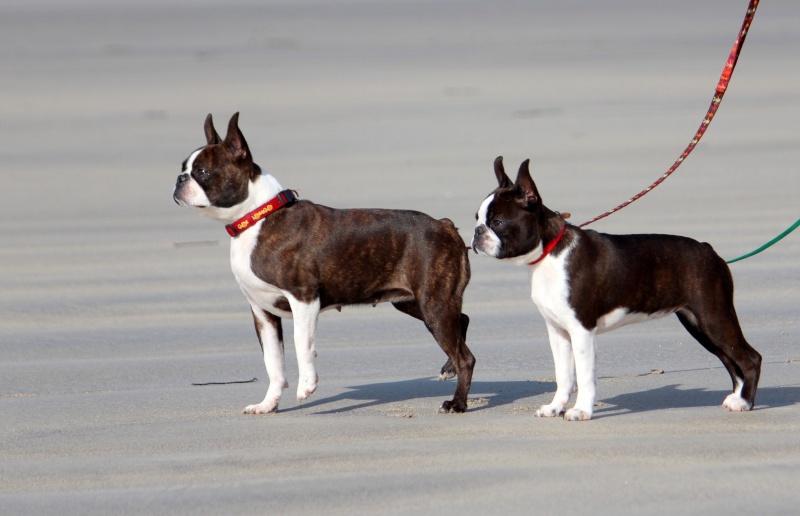 quand les gens confonde vos chiens avec une autre race!!! - Page 18 Img_4811