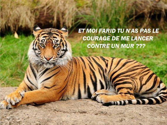 La photo du jour - Page 16 Tigre10