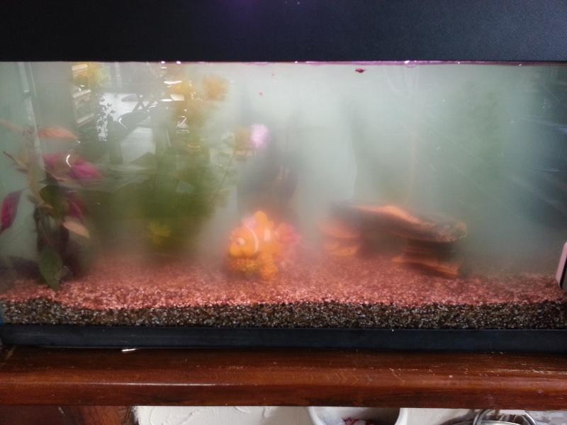 Aquarium trouble, voile blanc. 20131211