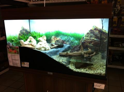Recherche Information : sur la maintenance des sesarma mederi (crabe a pince rouge) Img_1210