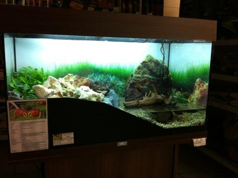 Recherche Information : sur la maintenance des sesarma mederi (crabe a pince rouge) Img_1211