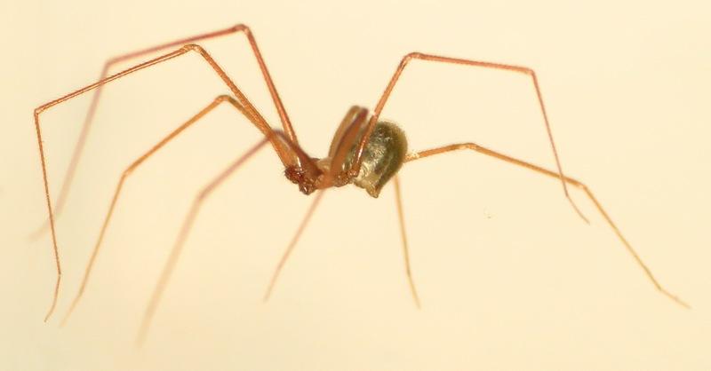 L'araignée Mongolfière... 08_11_11