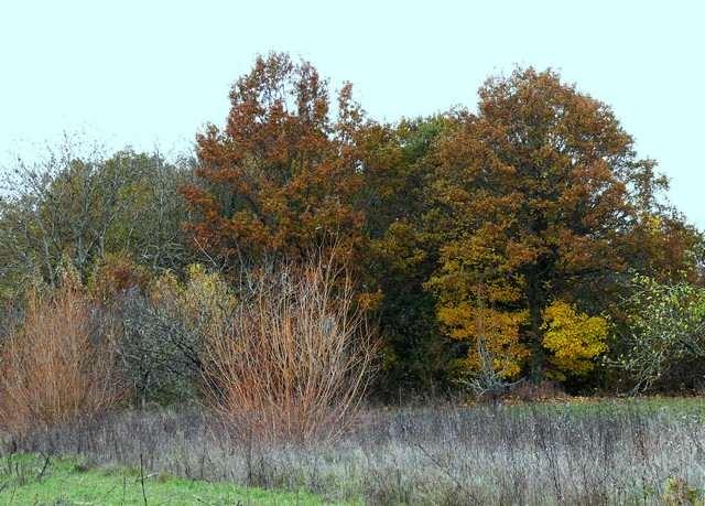 35 - Bel automne 2013 !!! 1611
