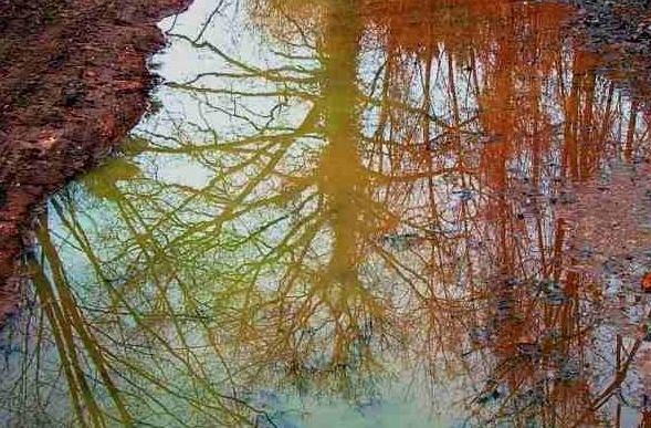 36 - Les reflets dans les flaques d'eau........ photos reçues !!! A_bmp10